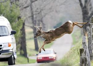 Deer Jumping Onto Road