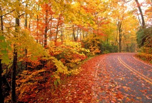 Wet Leaves Fall Road